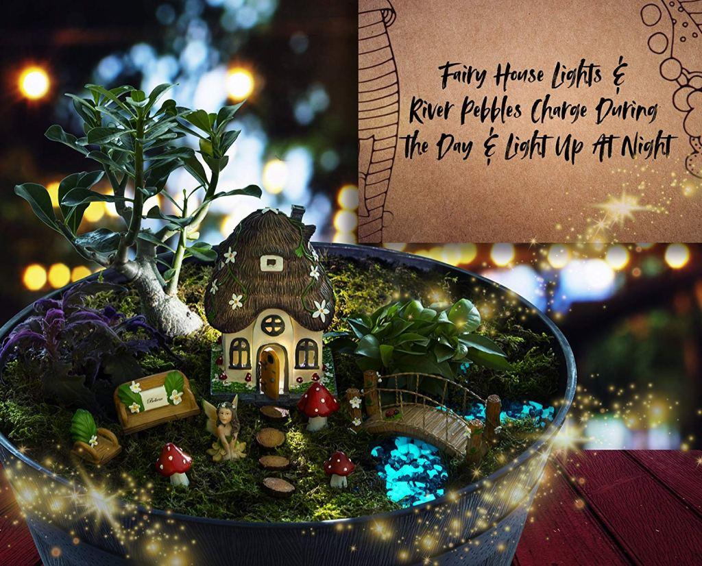 Wild Pixy Fairy Garden