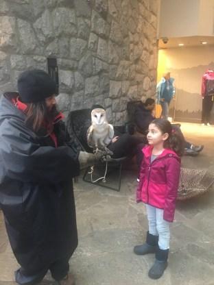 A Bela aprendendo mais sobre as corujas...