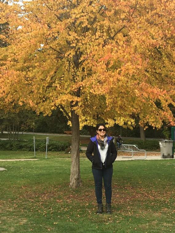 Outono no Stanley Park