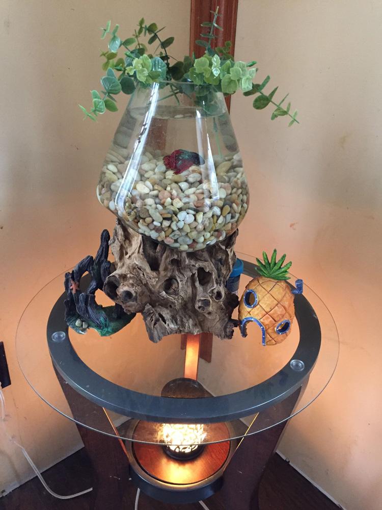 slump glass fish tank