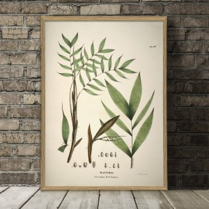 Bactris Cuspidata and Fissifrons Botanical Palm Print