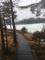 Eis auf dem Oderteich