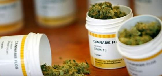 cannabis uso medicinal
