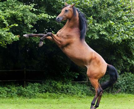 Die 10 schönsten Pferderassen der Welt