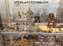 Micro Art Studio - Wolsung - Regalübersicht 1