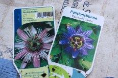 passiflora_150715_4