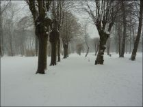 20130223_Brody-Winter_1_Zuber
