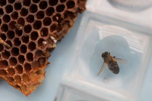 Alice Fong Yu Alternative School Garden Bee Program. 2013. Digital.
