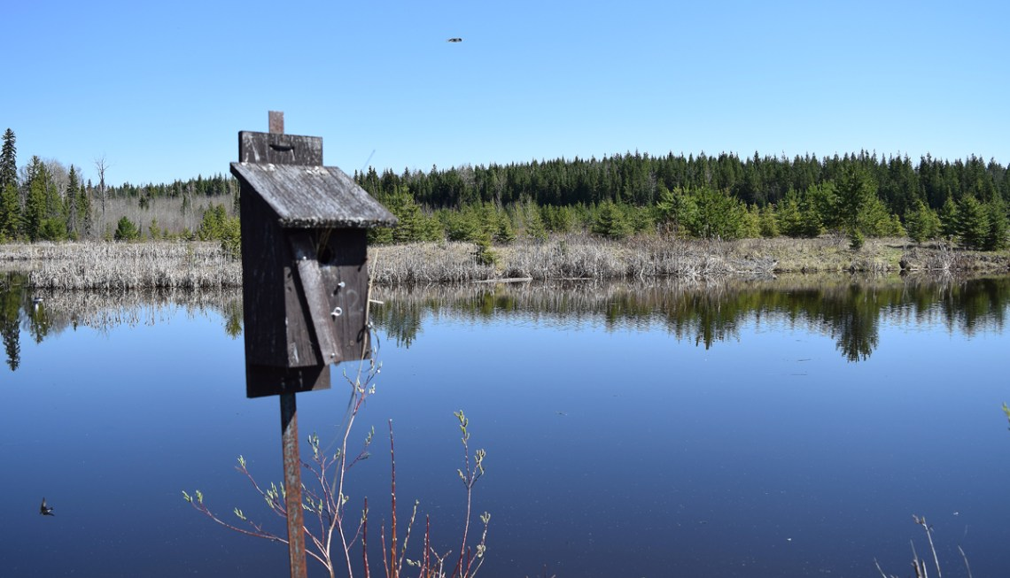 A birdhouse at Western Acres Wetland just off Muralt Road west of Prince George. Bill Phillips photo