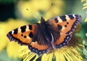 b_przyroda_motyl_03.jpg