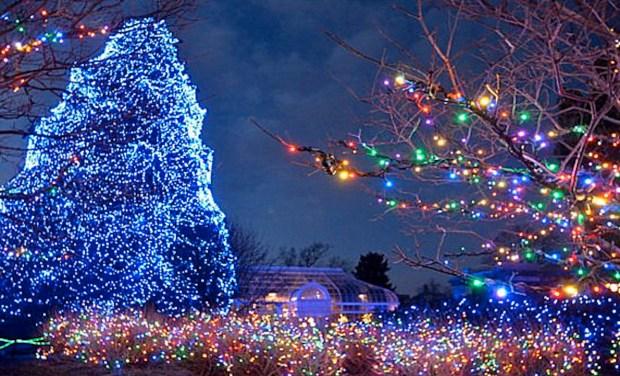 Toledo Lights Zoo