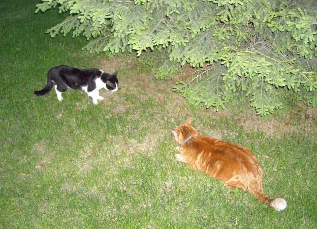 They meet under the fir tree...!
