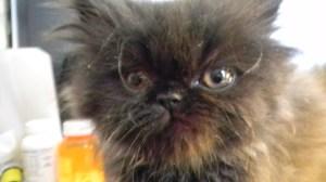Flashback to Andys kittenhood...
