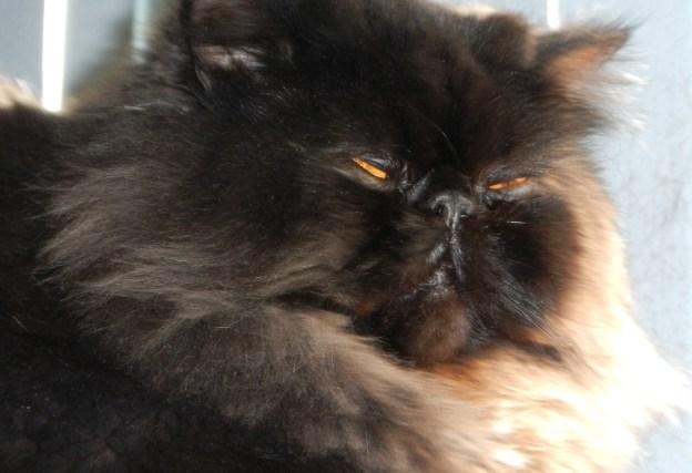 Dougy isn't a grumpy cat.