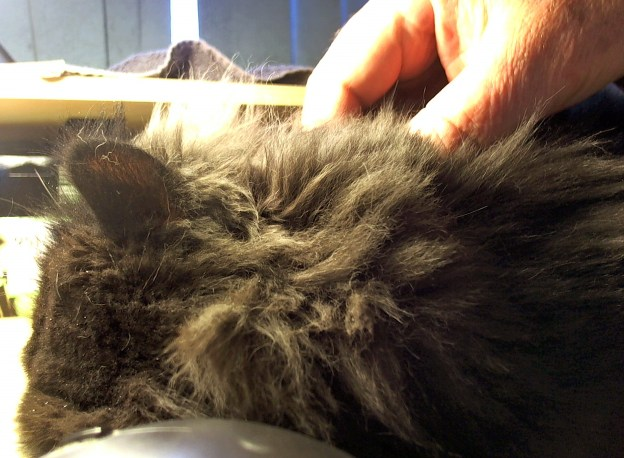 Dougy stopped by later to sleep by my hand.... Here, I massage his shoulder.