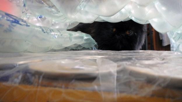 Peek-a-boo! Dougy examines the bubble-wrapped flats.