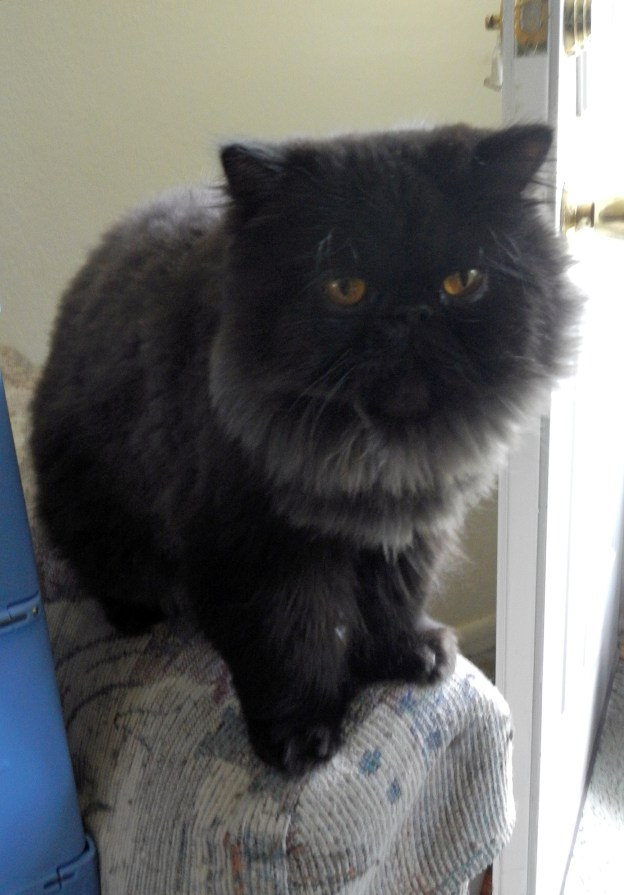 Dougy poses nicely for his photo. (Of course, I took eight others that were blurs of cat exiting the frame!)
