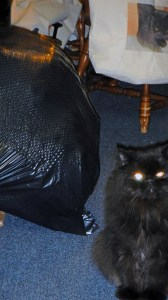 Something appeared in the corner of my eye: I was being watched!