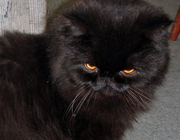 """Crop the hell out of it, and be happy his eyes are open, at least. Never mind Andy's giving his mean kitty look, you know, """"Cat from Hell""""."""