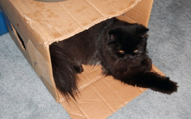 """I couldn't believe it. Andy slipped into Dougy's hidey hole. Where""""s Dougy?"""