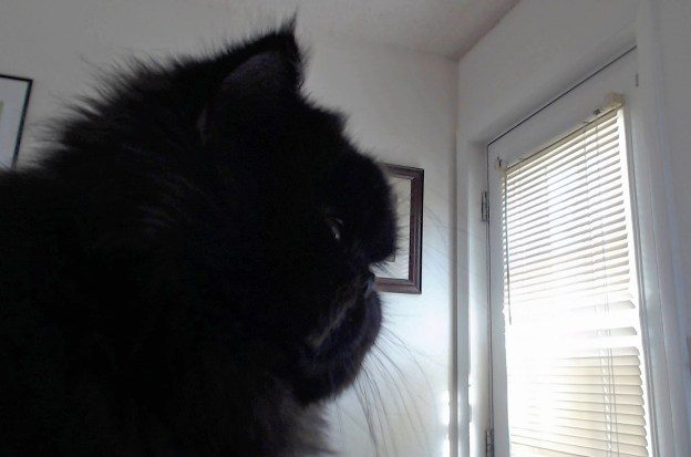 Andy forgets for a moment he is a wanted kitty. What's happening in the fir tree out the back window? Andy wants to know!