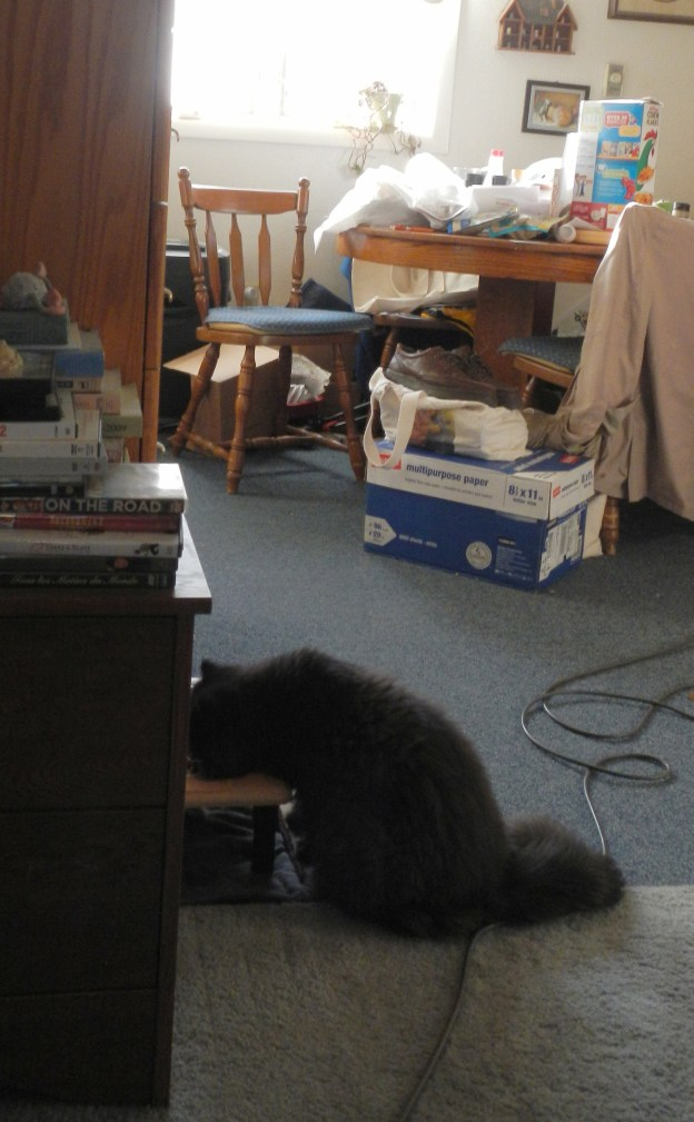 Aw, it looks like Andy's a good boy! He's eating crunchies at the cat feeder.