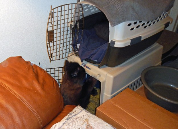 Dougy has the same idea, but wants the same carrier as Andy. He could have the bottom one, but that's not the one Andy has. Cat logic!