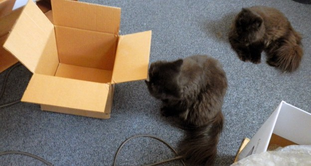 The UPS man's truck barely disappeared from sight, but Dougy and Andy needed me turn the  shipping box to them.