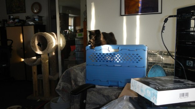 Typical scene, looking toward the blue carrier. Cat enjoying the sun, the view.