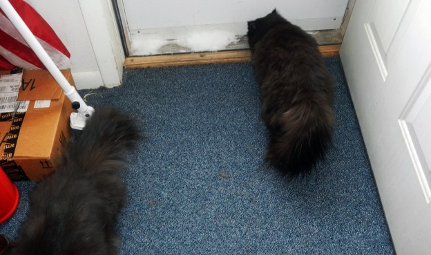 "Dougy notices Doug (the human one) sneaking over to the door, and he high tails it. (Well, ""low tails it"" because it's more stealthy!) Andy, fixated on the snow by the door, doesn't notice the drama unfolding...!"