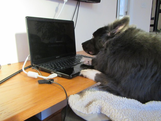Ms. Zulu, preparing to set up the Skype connection.