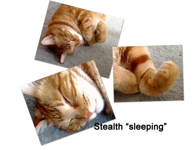 stealth sleeping