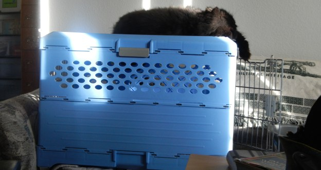 Andy resting on top of his favorite blue carrier perch!