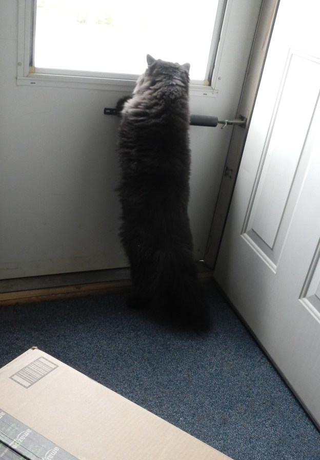 Dougy hears something outside: Another box delivery? (No, false alarm.)
