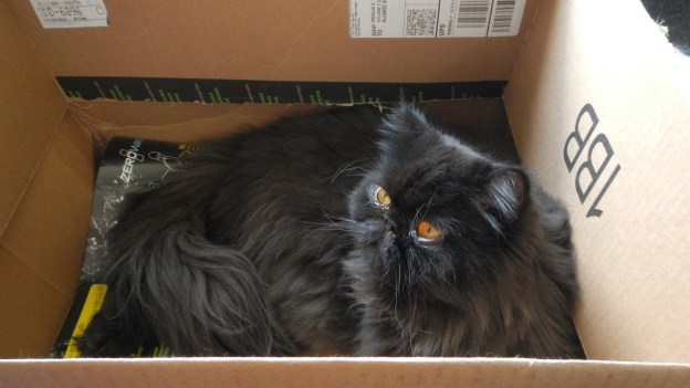 Andy checks out the possibilities for his new box. It's a comfortable fit, he can tell!