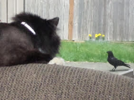 sox and bird