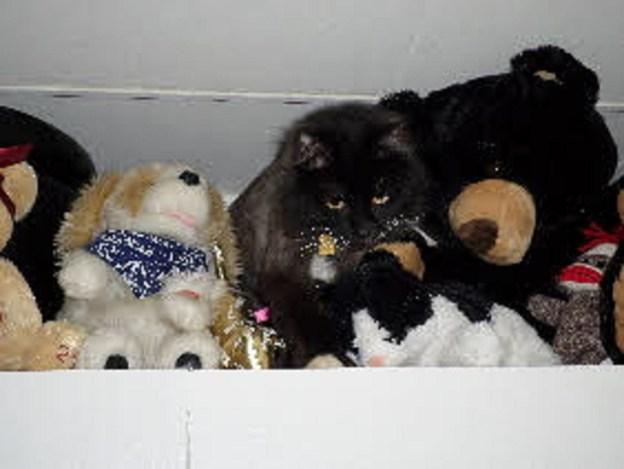 Where's kitty?