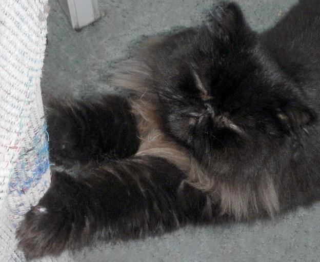 Dpigu beingh a very naughty kitty... and enjoying it!