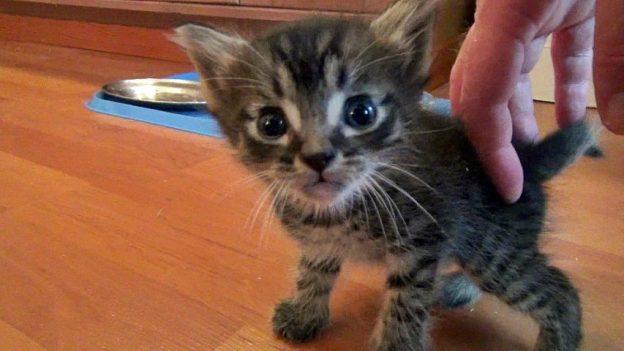 RIP, kitten..