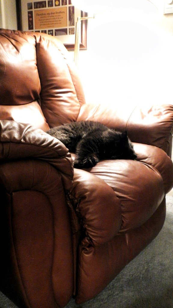 I spot Dougy on the recliner.