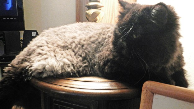 Andy's choice is to rest on his favorite end table, the one where he