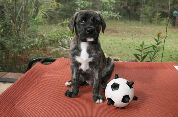 Benji! Ain't he cute!?