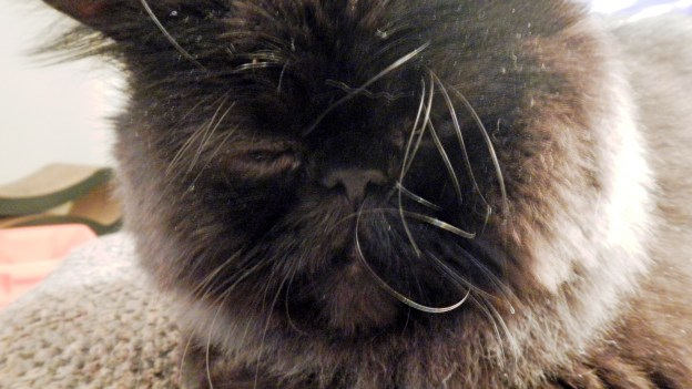 dougy 4 120815.jpg crazy whiskers