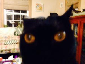 deborah's cats 7