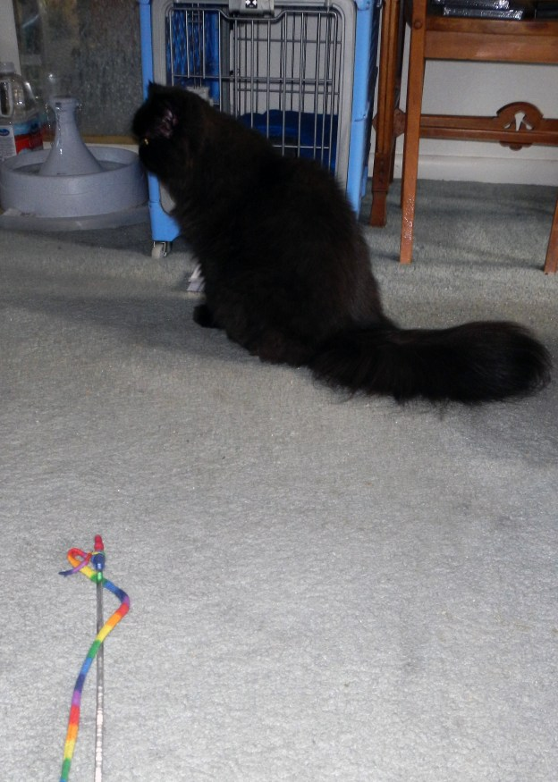 Andy 's presence before the wand toy is a slap in Dougy's face!