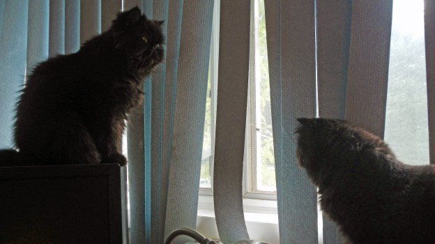 """Do you see what I see, Dougy? Andy's spotted something in the window."