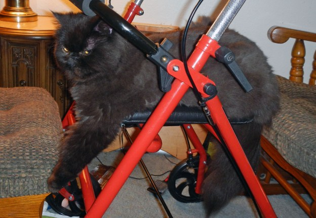 Now on the walker, Andy touches the ottoman. Dougy will be upset if he sees it, and Andy knows it!