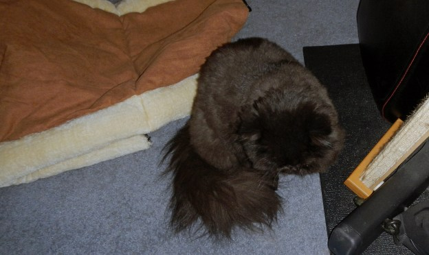 """Dougy hid in plain view, if behind the exerciser. """"Hee! Hee!"""" Kitty humor is a bit arcane."""