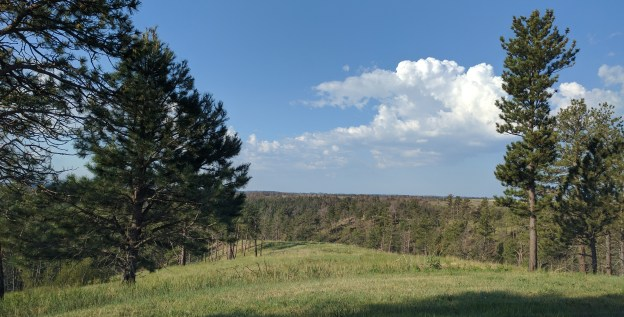 The predominent tree is the ponderosa pine. It is well-established in the Pine Ridge area.