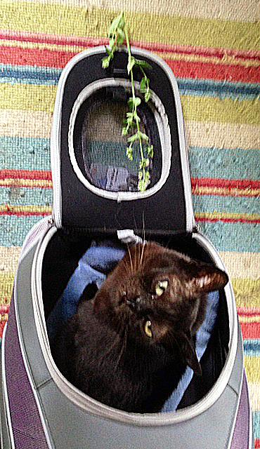 73016 deborahs cat 1